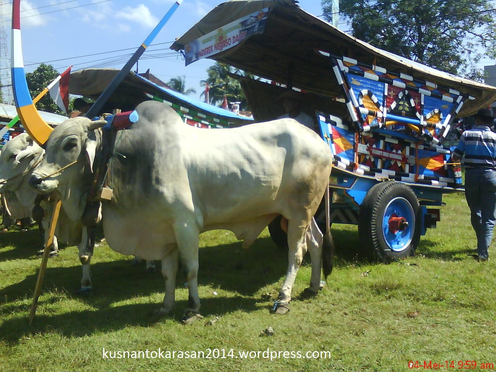 Ada Karnaval Gerobak Sapi Dan Andong Kuda Di Hut Bantul Ke 184
