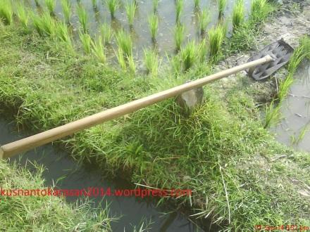 """Inilah alat penggaruk rumput atau biasa disebut """"Gosrok"""""""