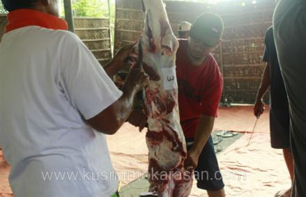 Pengambilan daging