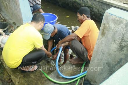Pembersihan jeroan dengan air sumur