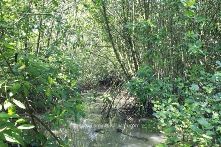 Mangrove atau bakau