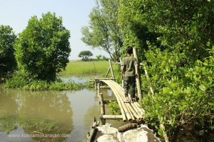 Melewati jembatan bambu