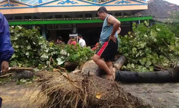Pohon tumbang di area parkir pantai Parangtritis