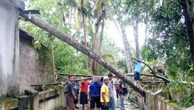Pohon kelapa menimpa rumah
