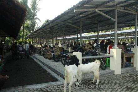 Los baru pasar Hewan Pandak