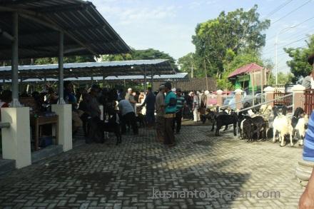Aktifitas jual-beli di pasar Hewan Pandak Bantul