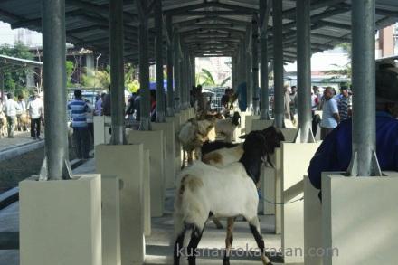 Los baru pasar Hewan Pandak.