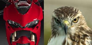 Ducati mirip burung elang
