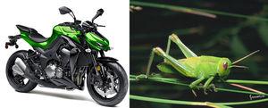 Kawasaki Z1000 mirip belalang